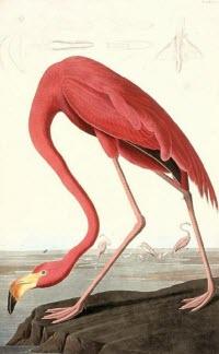 sg.netadmin/Audubon_Thebirds_of_America.jpg